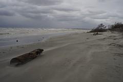 Anglų lietuvių žodynas. Žodis adriatic sea reiškia adrijos jūros lietuviškai.