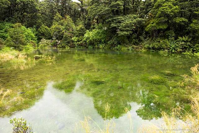 猴溪 (Monkey Creek)的水非常清澈