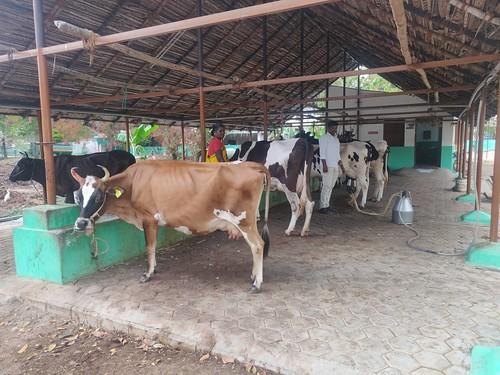 Vidyalaya dairy - IARD, Coimbatore )