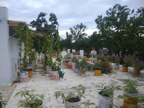 Terrace Garden - Ramakrishna Mission Vidyalaya