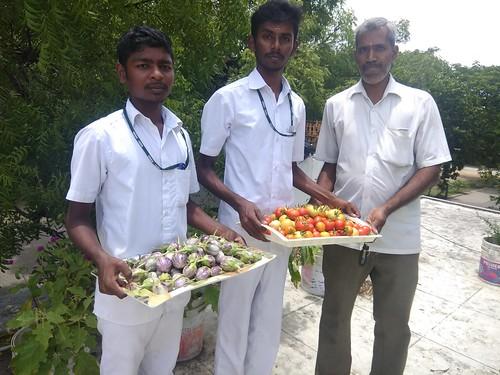 Harvested Vegetables from Terrace Garden - Ramakrishna Mission Vidyalaya