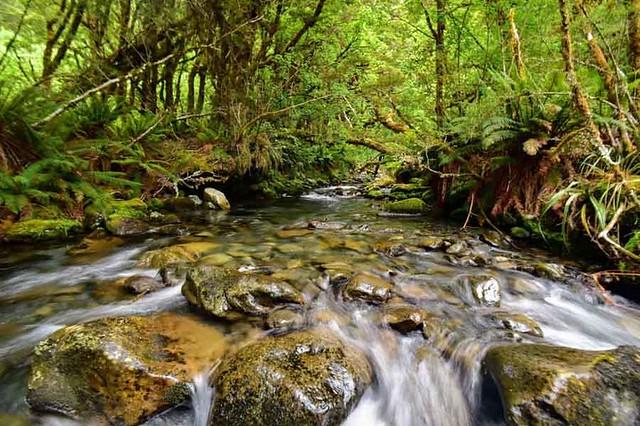 猴溪 (Monkey Creek)擁有無汙染的水源