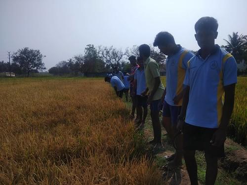 Crop Production Field - IARD, Coimbatore