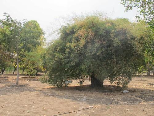 Nakshatra  Vanam - IARD, Coimbatore