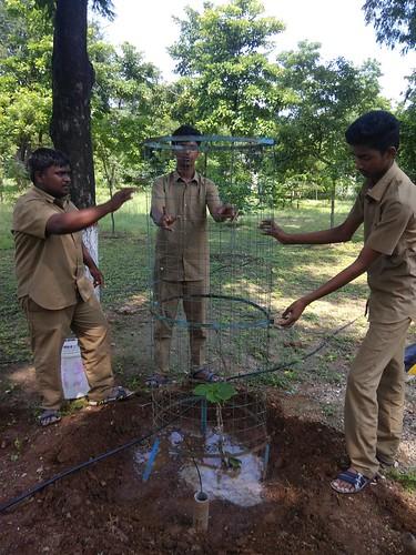 Planting of Tree Saplings - IARD, Coimbatore