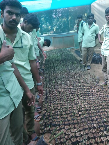 Plant Propagation in Mist Chamber - IARD, Coimbatore