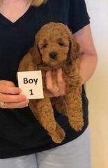 Lola Boy 1 pic 4 3-21