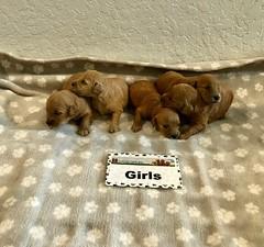 Kasey Girls pic 4 3-21