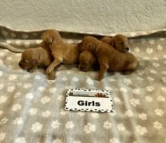 Kasey Girls pic 3 3-21