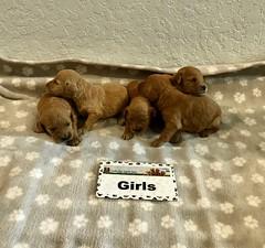 Kasey Girls pic 2 3-21