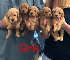 Penny F1B Girls pic 4 3-21