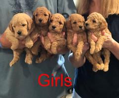 Penny F1B Girls 3-21