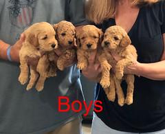 Penny F1B Boys pic 2 3-21