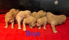 Kizzie Boys 3-21