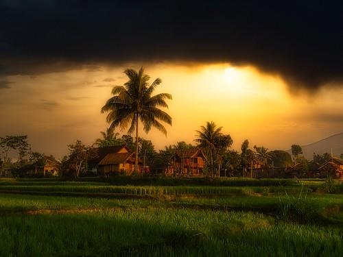 Losmen rizières