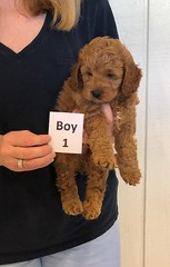 Lola Boy 1 pic 3 3-21
