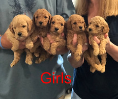 Penny F1B Girls pic 2 3-21