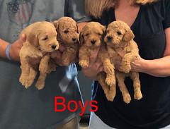 Penny F1B Boys 3-21
