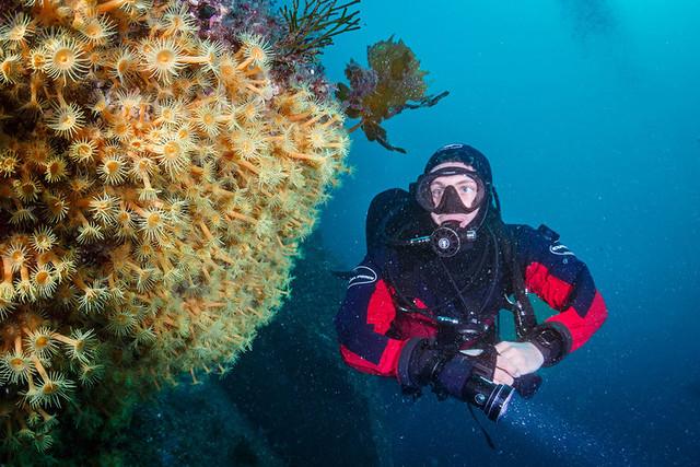 米佛峽灣潛水scuba diving