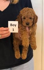 Lola Boy 1 pic 2 3-21