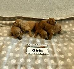 Kasey Girls 3-21