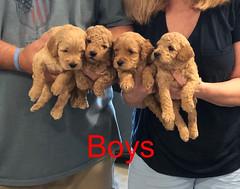 Penny F1B Boys pic 3 3-21