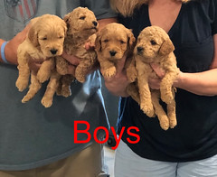 Penny F1B Boys pic 4 3-21