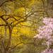 spring in dumbarton oaks