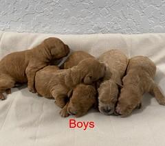 Kasey boys 3-11-20 pic 2