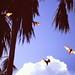 Flying Foxes, Mataranka
