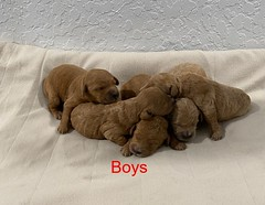 Kasey boys 3-11-20 pic 4