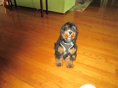 Quincy 4 months 17 pounds