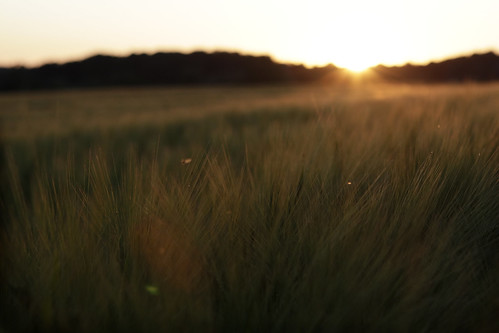 Sunset over smooth grass