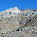 Bioherm (Antelope Valley Limestone, Middle Ordovician; Meiklejohn Peak, near Beatty, Nevada, USA)