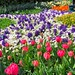 Flowers at the Keukenhof gardens, Netherlands - 2392