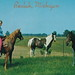 NW Beulah MI 1955 GIDDY-UP at JUSTUS E. SMITHS BEULAH RIDING STABLE Benzie Countys home to Gaited Kentucky and Western Range Horses Trail Riding with view of Crystal Lake Fun Happy Memories for many1
