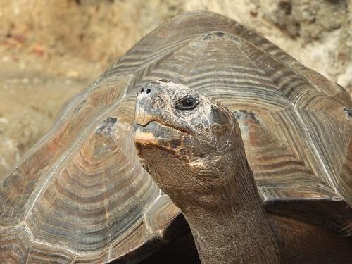 8129ex Galapagos glance
