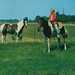 NW Beulah MI 1955 GIDDY-UP at JUSTUS E. SMITHS BEULAH RIDING STABLE Benzie Countys home to Gaited Kentucky and Western Range Horses Trail Riding with view of Crystal Lake Fun Happy Memories for many3