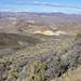 Daisy Gold Mine (head of Fluorspar Canyon & Perlite Canyon, near Beatty, Nevada, USA) 1
