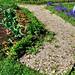 Garden path of Oyster Shells