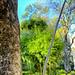 Bambus and Jacaranda