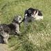Erstes Hundekumpel Treffen bei unserem Gassi für Lotta ohne Leine