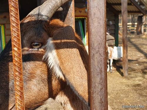 Приватний зоопарк, Петропавлівська Борщагівка біля Київа 18  Ukraine  InterNetri