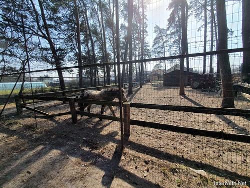 Приватний зоопарк, Петропавлівська Борщагівка біля Київа 10  Ukraine  InterNetri