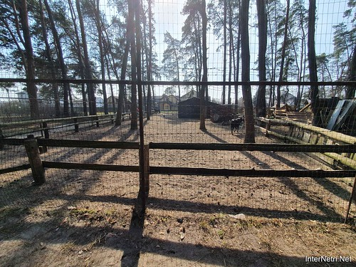 Приватний зоопарк, Петропавлівська Борщагівка біля Київа 09  Ukraine  InterNetri