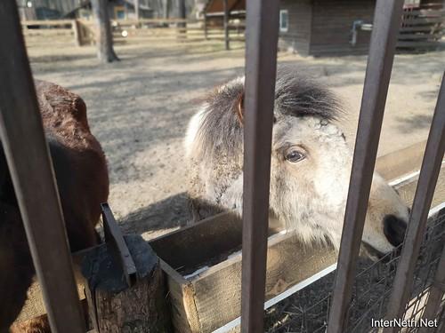 Приватний зоопарк, Петропавлівська Борщагівка біля Київа 02  Ukraine  InterNetri