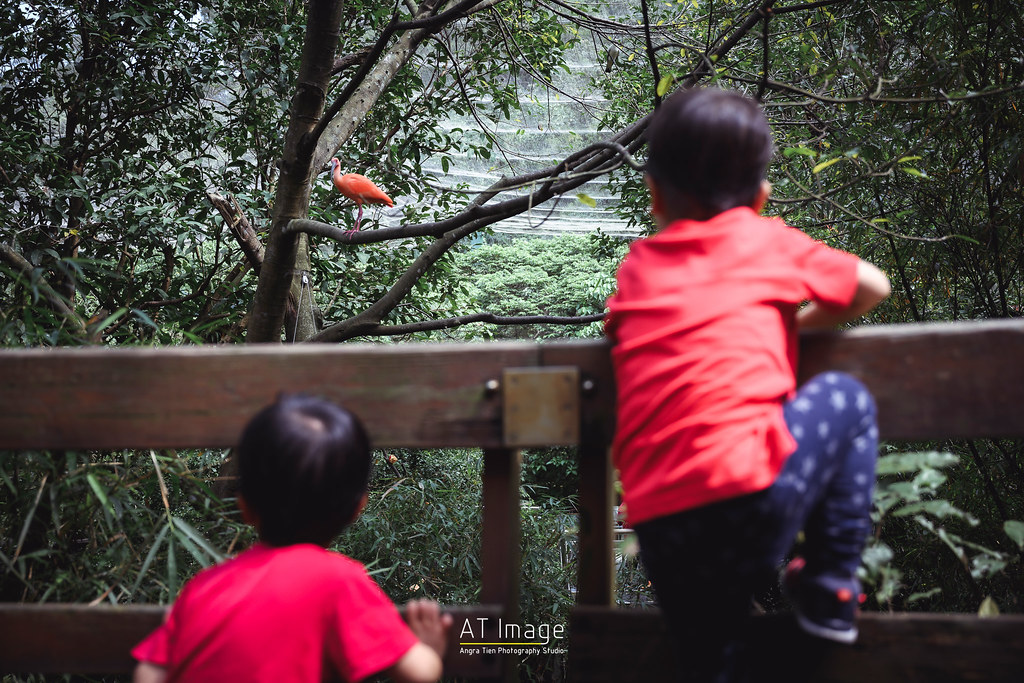<全家福> Yi Hui全家福 / 木柵動物園
