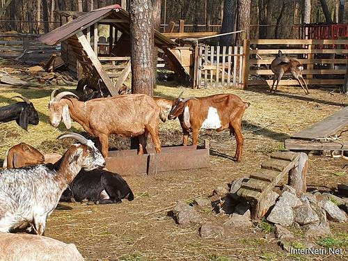 Приватний зоопарк, Петропавлівська Борщагівка біля Київа 19  Ukraine  InterNetri