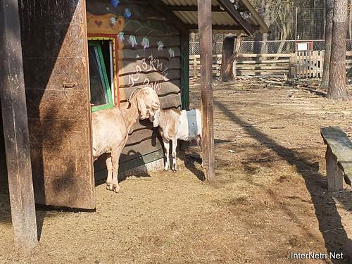 Приватний зоопарк, Петропавлівська Борщагівка біля Київа 17  Ukraine  InterNetri