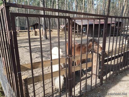 Приватний зоопарк, Петропавлівська Борщагівка біля Київа 01  Ukraine  InterNetri